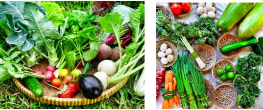organice produce