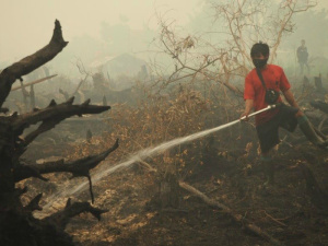 Borneo Forest Fire